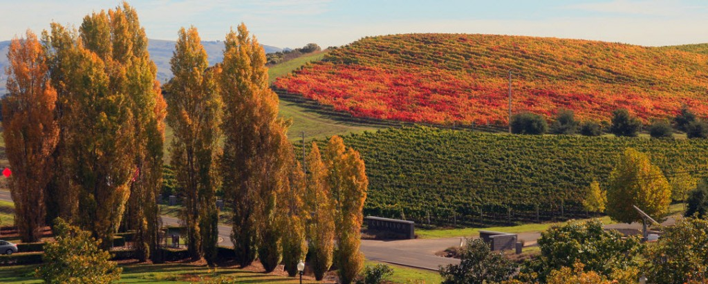 Fall_in_Napa_Valley