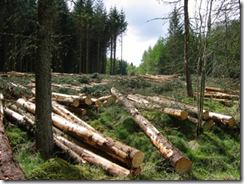 Picture of trees, part cut down